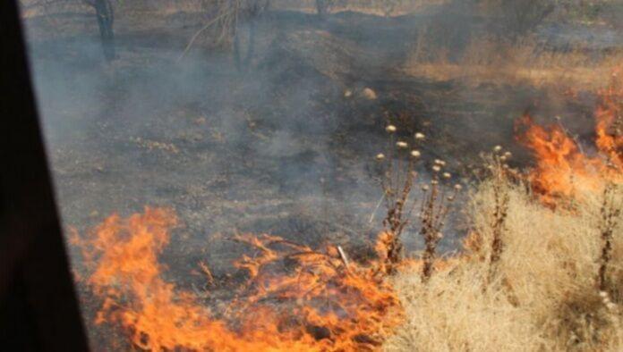 خبرنگاران 2 هزار متر از عرصه های جنگلی بوستان چیتگر تهران در آتش سوخت